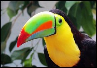 NATIONAL AVIARY - Tuesday August 21st